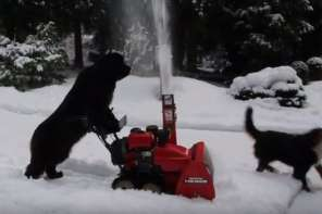 Amazing Snow Blowing Dog