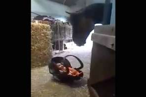 Horse Rocks Cradle To Keep Baby From Crying