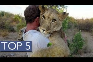 Top 5 Unlikely Animal Friends