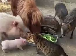 Animals Eating Together