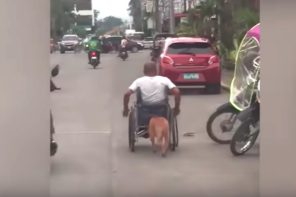 Pet Dog Pushes Owner In Wheel Chair
