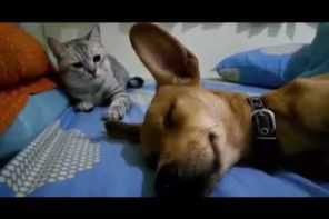 Farting Dog Makes Cat Angry