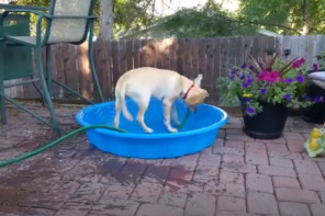 Dog Caught Filling Up Doggy Pool