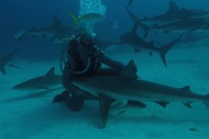 Shark Whisperer Uses Hypnosis To Calm TIger Sharks
