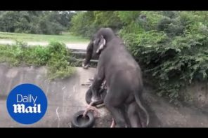 Amazing Heroes Rescue Elephant From Canal