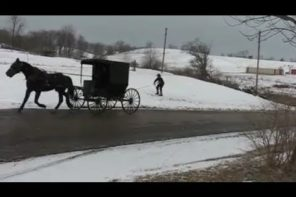Amish Man Skiing Behind A Horse Drawn Buggy