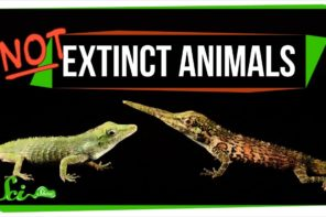 Animals Thought To Be Extinct But Aren't
