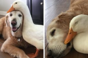 Dog And Duck:Unlikely Friends
