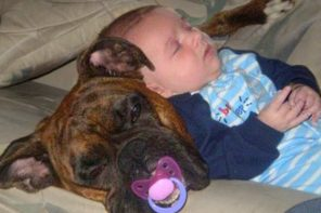 Funny Moments Babies Sleep With Dogs
