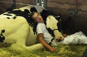 Boy And His Cow lose Cow Competition But Win The Internet