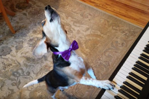 Singing Piano Dog Sensation Buddy Mercury