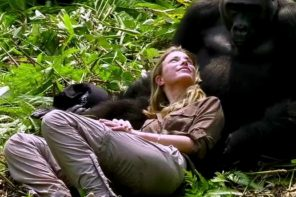 Woman Accepted By Wild Gorillas