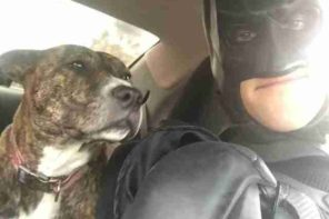 A Man Dressed As Batman Rescues Animals From Death