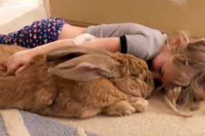 This Giant Rabbit Brings Smiles To His Family