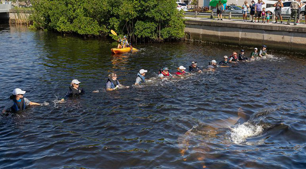 Swimmers Form Human Chain To Save Dolphins
