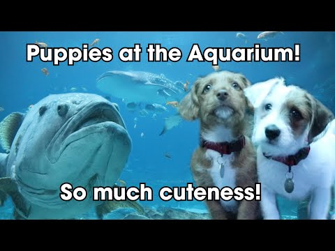 Puppies In An Aquarium