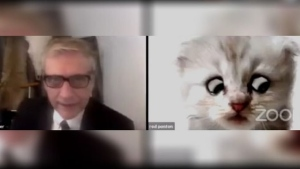 This Lawyer Is On A Zoom Call Posing As A Cat