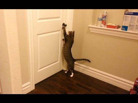 Clever Cats Open Doors