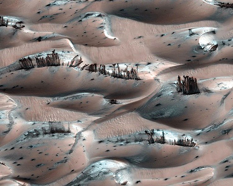 Trees And Lakes Spotted On Mars?