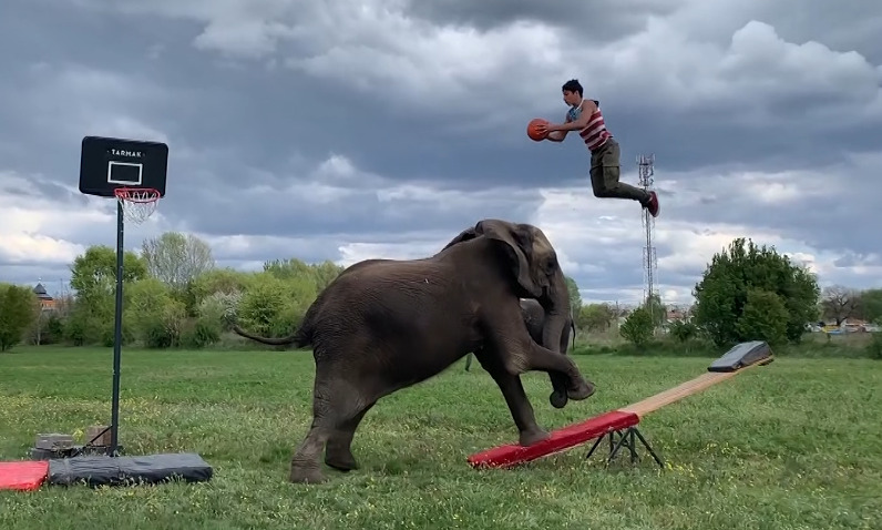 This Boy's Best Friend Is An Elephant